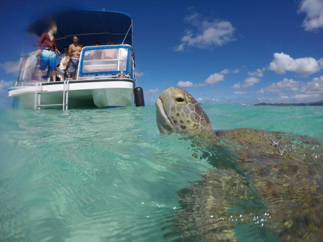 ハワイ「天国の海」にいるウミガメ
