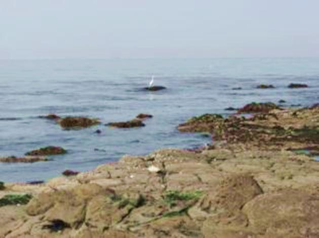 大阪の海水浴場である長松海岸
