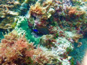神津島の海の中