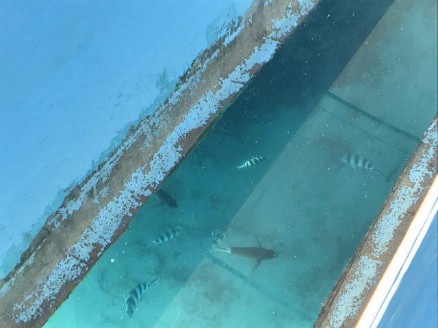 与論島の百合ヶ浜へ行く時に見れる魚