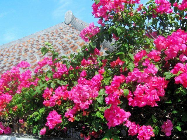 沖縄は冬が穴場?!おすすめしたい理由と9つの楽しみ方