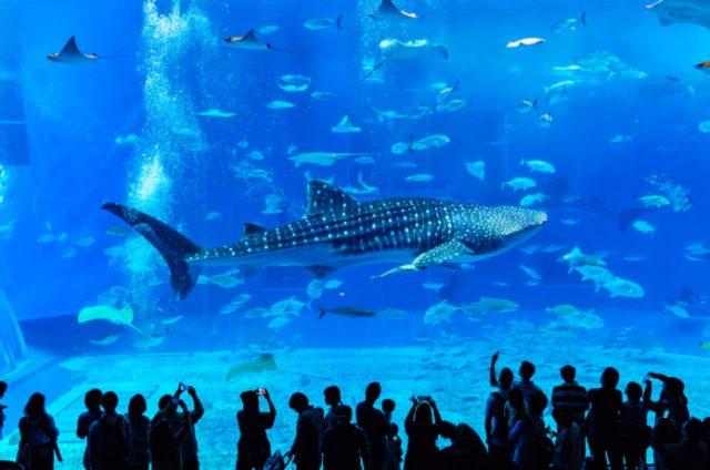 沖縄の冬でも楽しめる美ら海水族館