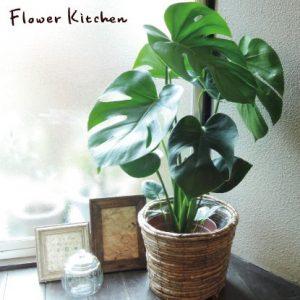 ハワイアンインテリアに必須の観葉植物