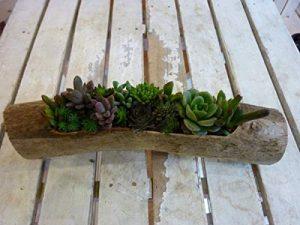 流木と植物でインテリア