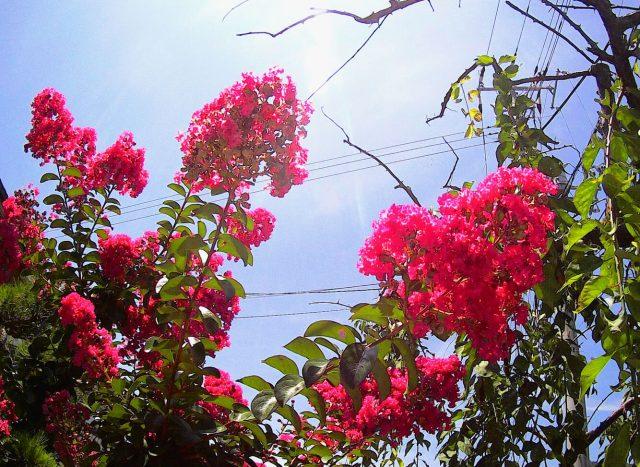 ムソンで花の写真を撮る