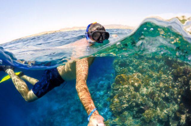 水中と陸上を同時に撮影した写真