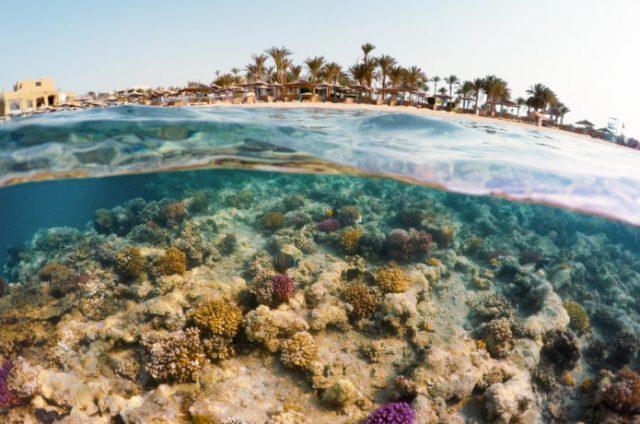 水中と空を同時に撮影した写真