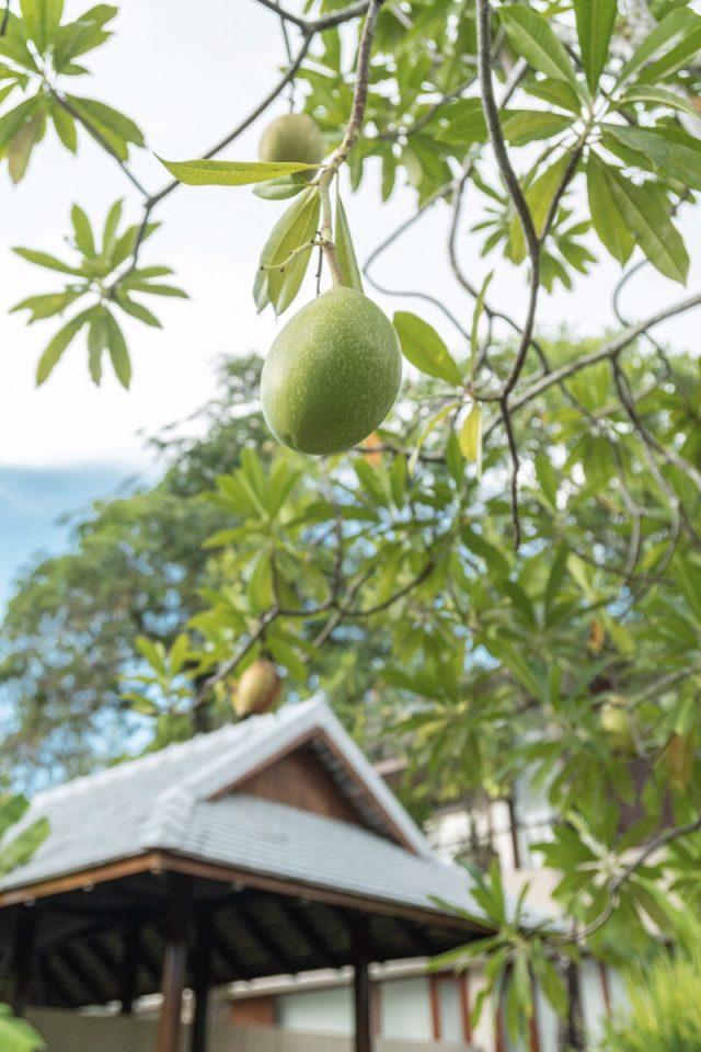 サロジンに生えていたフルーツ