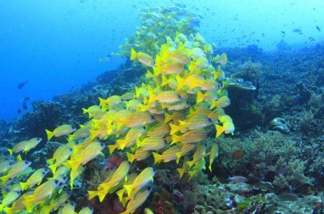 シミラン諸島でダイビング