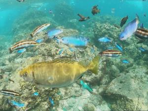 ヒリゾ浜の水中の様子と魚