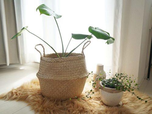おしゃれな鉢カバーと植物